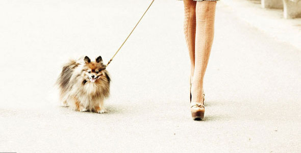3-Lessons-You-Can-Learn-from-Your-Dog-about-Business