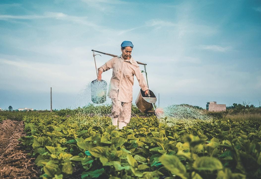 Photo: Hưng Nguyễn Việt, Unsplash